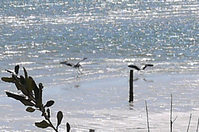 heron & seagull